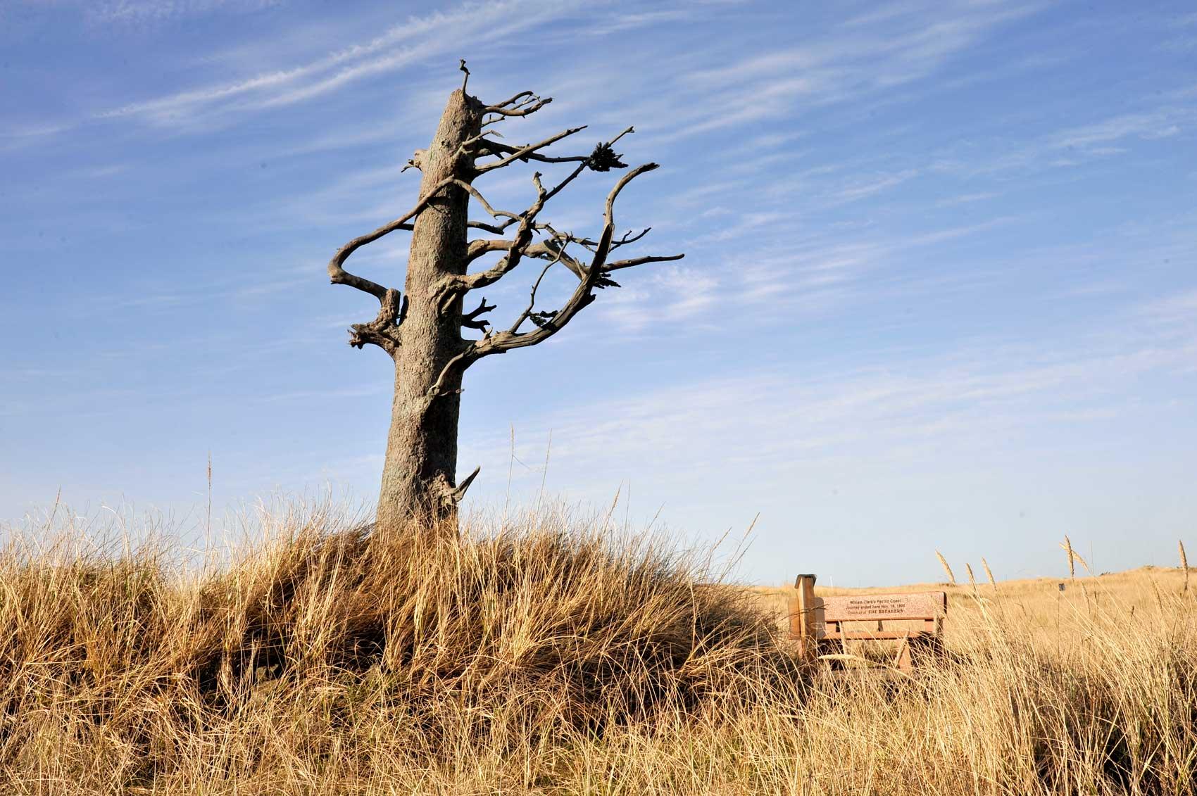 clarks-tree